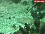 Vannes. Des bébés requins en nombre... à l'aquarium