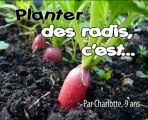 Comment planter des radis
