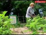 Morlaix. Conseils de jardinage au naturel