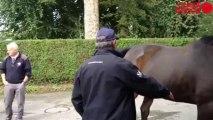 Initiation aux jugements de chevaux - Initiation aux jugements de chevaux