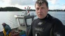 Dinan. Coquilles Saint-Jacques : comment la pêcher sans draguer
