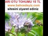 arı otu tohumu,ARI OTU TOHUMU,arı-otu-tohumu, arı otu tohumu,fazelya,arıotu tohumu