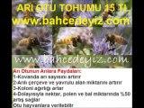 ARI OTU TOHUMU,ARI-OTU-TOHUMU, arı otu tohumu, arı otu tohumu satışı,fazelya tohumu