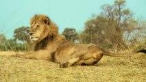 Lions on tour -- Jose Cuervo #PARTYANIMALS