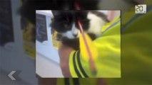Un chaton touché par un carreau en pleine tête.