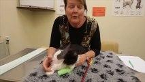 Moo Moo le chat avec une flèche empalé dans la tête