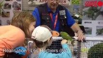 Championnat de France d'ornithologie - Les oiseaux en parade à Saint-Hilaire-de-Loulay
