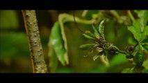 L'instant nature extrait de : forêt de Nicolas Goudeau-Monvois