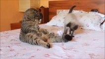 Des chats, des chats et des chats... THE compilation de chats à voir absolument!