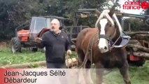Les chevaux nettoient des sentiers à Concarneau - Débardage à cheval