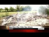 Killer bees attack: Texas man stung to death by Africanized bees
