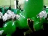 Asse 2-1 Nice tifos greens angels