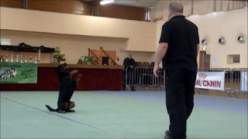 Rottweiler – Balzac concours arnas