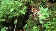 Forêt d'Aurillac dans le Cantal du groupement forestier Avenir Forêt