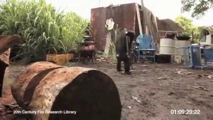 SCIMMIA SPARA A SOLDATI (VIDEO INCREDIBILE)