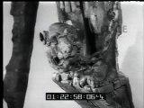 """Italia: Consegnata la bandiera di combattimento alla """"Pietro Cavezzale""""  Giappone: Un anniversario che trova i giapponesi di diverso parere  Svezia: Nel Museo Storico Navale di Stoccolma i resti del """"Wasa"""""""