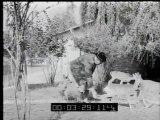 Italia: Con acqua nella benzina più chilometri  Spagna: Una eccezionale mostra numismatica  Austria: Un orfanatrofio per cerbiatti  Italia: Cani ricchi e cani poveri  Argentina: Il Museo del Tango