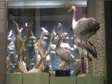Le muséum d'histoire naturelle du Var