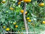 Mekong delta travel HD - Vietnam Cool Travel