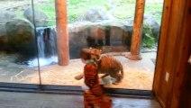 Un bébé tigre joue avec un enfant déguisé en tigre. Trop mignon!