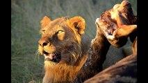 Photo Safari Slide Show - Photos of Africa