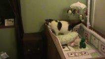 Chat Trop gros tombe dans une boite!