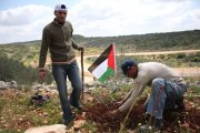 Israeli army order Palestinian farmers to chop down hundreds of olive trees