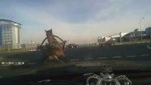 Pendant ce temps en Russie-un cheval et sa charette percute une voiture