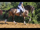 Vente de chevaux 34 , chevaux espagnols , couleurs, loisirs, club, poneys à la vente