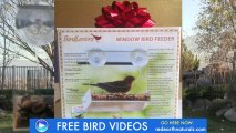 Anti Squirrel Bird Feeder Is A Fun Way to Bring Mother Nature Indoors