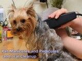 Veterinarian Mississauga | Animal Hospital Mississauga - Affordable Pet Vet Services