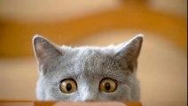 Les photos de chats & chatons les plus drôles!!