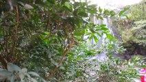 COSTA RICA WATERFALL CORTEZ - TOP FREE COSTA RICA WATERFALL - LLANOS DE CORTEZ WATERFALL - 1080p