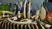 Record number of smuggled animals seized