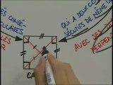 Les rectangles, les losanges et les carrés