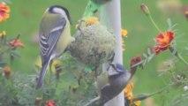 Jardinage : comment aider les oiseaux à passer l'hiver