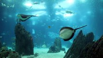 1060_Amazing_view_underwater_aquarium_with_many_fishes