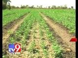 Gujarat HC issues notice against Radadiya over Junagadh land acquisition - Tv9 Gujarat