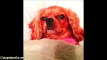 Les chiens les plus mignons de 2013 - Compilation de Toutous trop mignon.