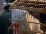 Hanım - 1.kısım - Yıldız  Kenter  -Hanım Kedi - Film'i --shaolin efsanesi - kral sejong - kubilaysavash_- SHAOLİN EFSANESİ