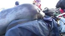Un bébé éléphant de mer bien curieux... Et trop mignon !