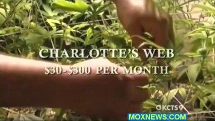 "Marijuana Refugees! ""I Must Say! This Is Actually A Miracle Plant! Marijuana"""