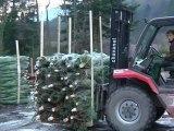 Noël: de la forêt aux magasins, place au ramassage des sapins - 03/12