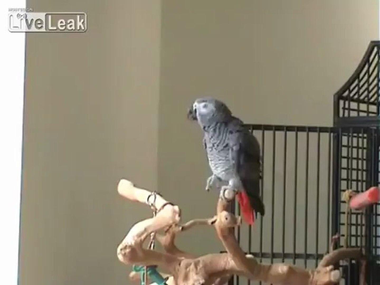 Musician Parrot