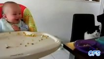 Compilation of Babies Laughing at Cats - So cute!!