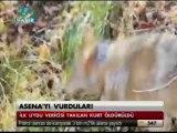Asena'yı da Vurdular TGRT Ana Haber