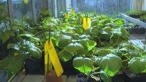Stéphane Le Foll donne une impulsion nouvelle aux stratégies de biocontrôle en agriculture