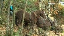 Cheval Territorial : Préserver le cheval de trait breton