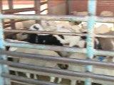 Κλειστά σφαγεία στο Καρπενήσι