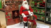 Cats and dogs sit on Santa's lap in North Carolina
